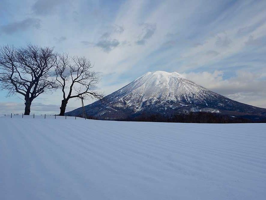 Niseko Winter