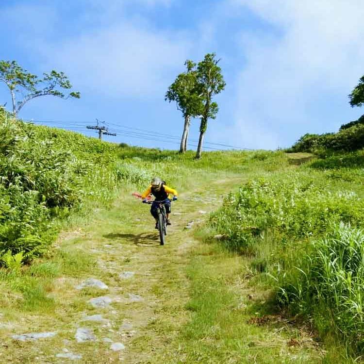 Downhill mountain biking in niseko
