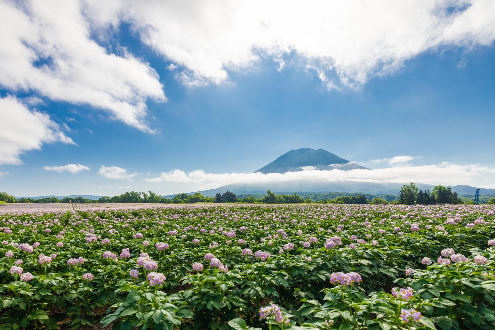 Yotei and Farms