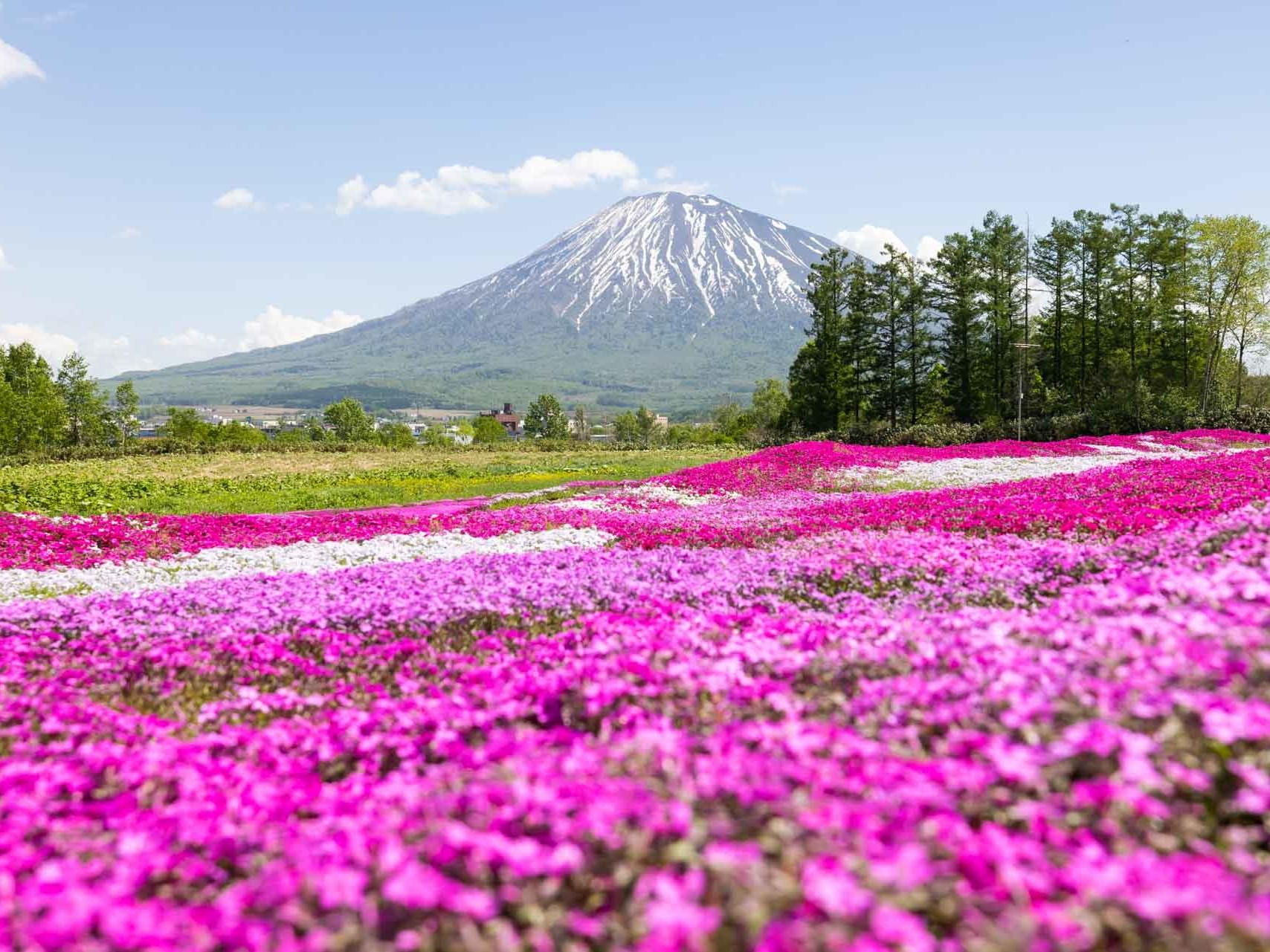 Shiba sakura garden