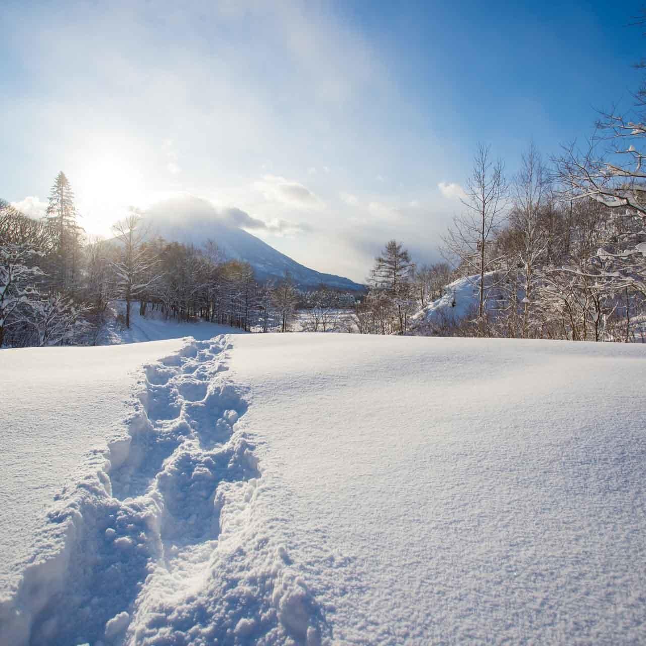 ニセコの冬
